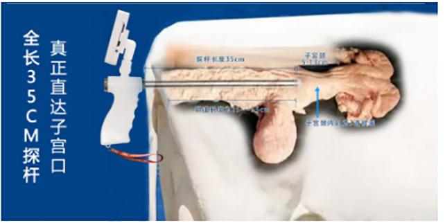 养牛科普:母牛生殖系统与人工输精