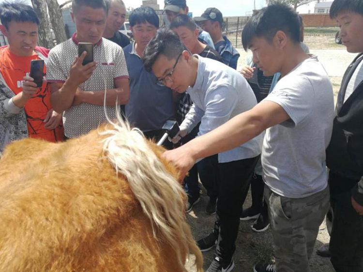 内蒙古呼伦贝尔市贝尔苏木畜牧兽医站-爱牧多案例