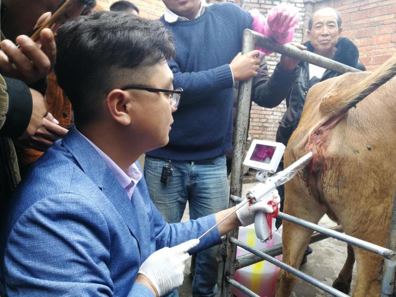 牛可视输精枪